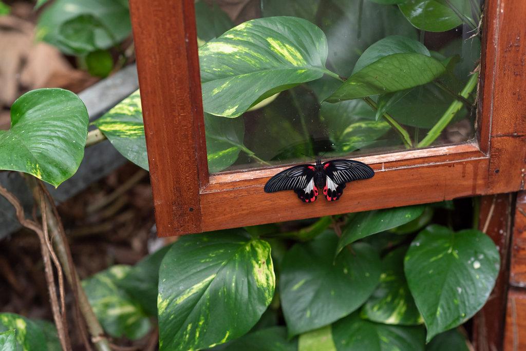 Vlinders in de vlindertuin