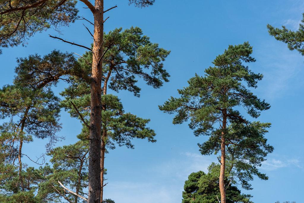 Bomen op Veluwe (NL)